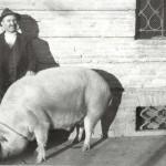 uomo_maiale_350kg
