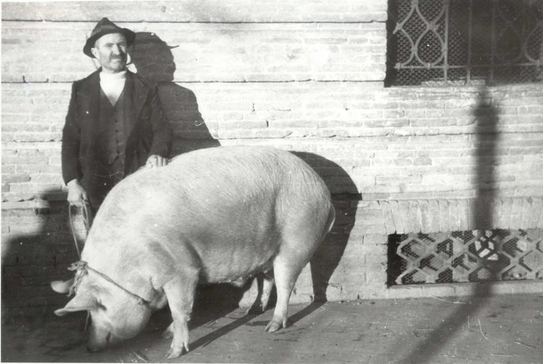 Arrivano le Feste, si rinnova la tradizione del maiale